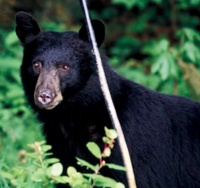Vader residents warned of local bear sightings