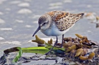 Late summer continues to offer wildlife viewing venues