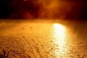 Dawn on the Willapa