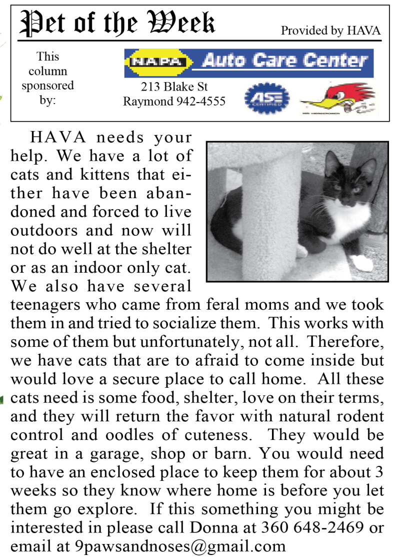 Pet of the Week 12.9.15