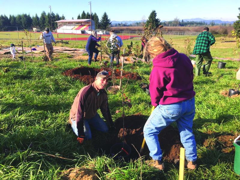 Volunteers planting fruit trees in the Winlock community garden.