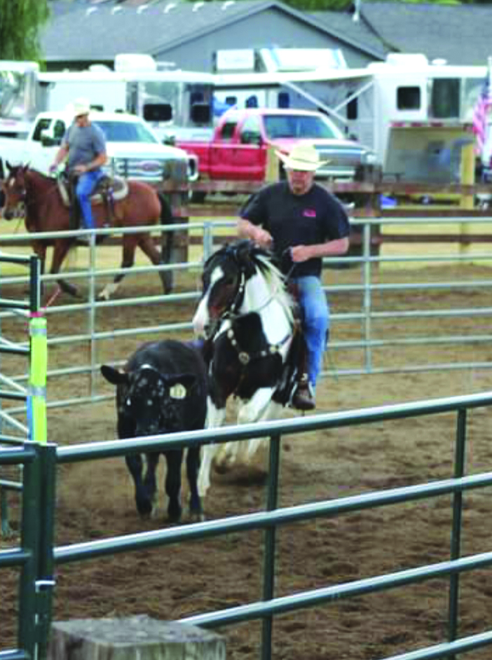 Git Along Little Doggies - Cattle Sorting Practice returns to the fairgrounds