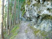 Covell Creek an easy hike near Cispus River