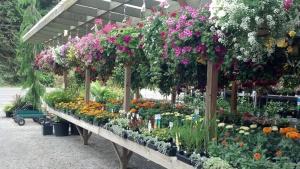 Cedar Falls  Nursery is dedicated to perfection