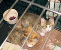 Labor of love helps reduce local feral cat numbers