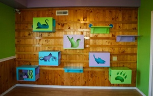 South Bend students create cat wall for HAVA