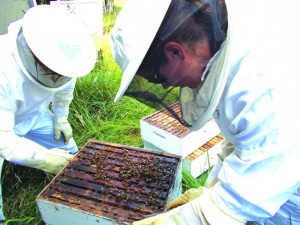 Local club produces delicious, healthy, homemade honey