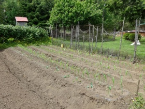 Tips for your vegetables from long-time gardener