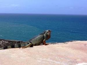 Living life in San Juan, Puerto Rico