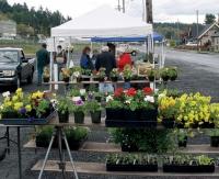 Market under way in Winlock