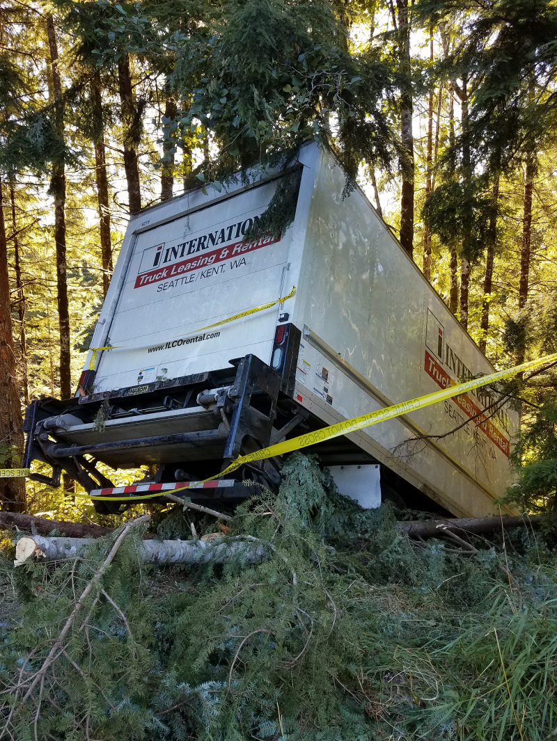 Trees save driver from injury