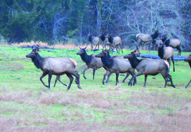 A look at local wildlife