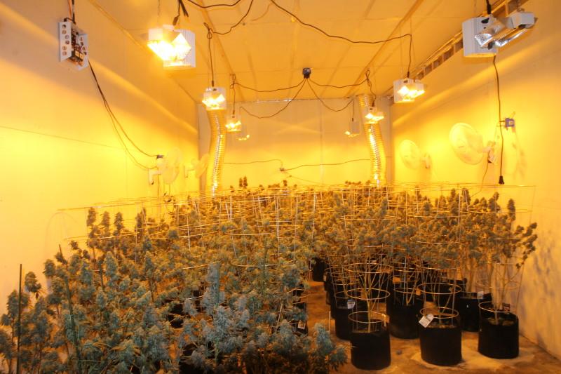 Another illegal marijuana grow busted