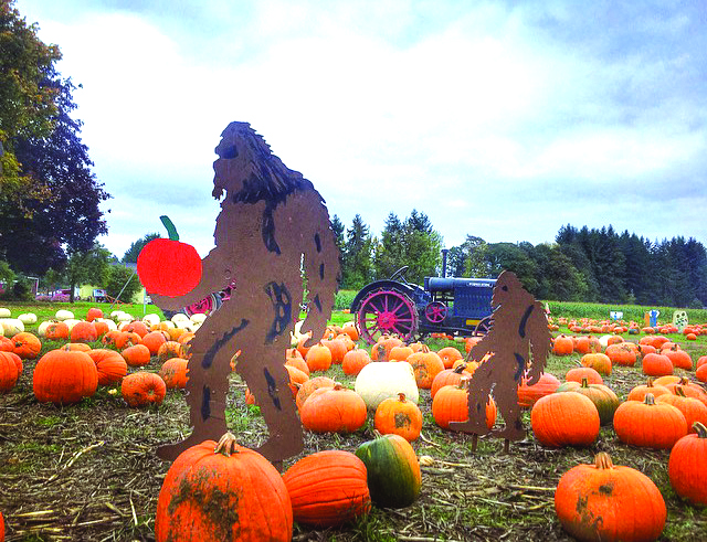 Find the Great Pumpkin  at the Pumpkin Patch